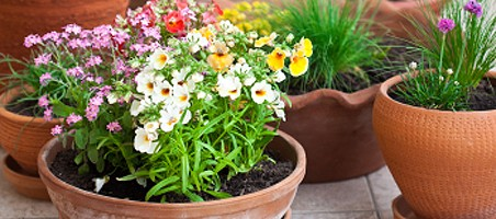 Kübel-Pflanzen