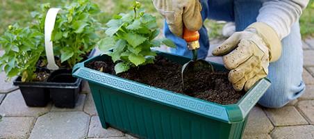Balkonpflanzen richtig umtopfen