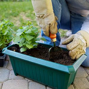 Kübelpflanzen richtig umtopfen