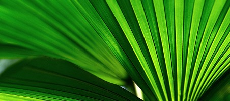 Palmen im Kübel