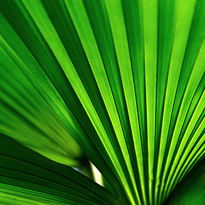 Palmen im Topf