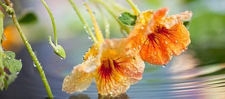 Einjährige Kletterpflanzen als Sichtschutz
