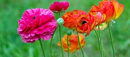 Blühende Sommer-Blumen