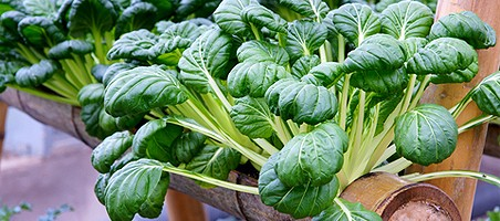 Hydrokultur Kübelpflanzen