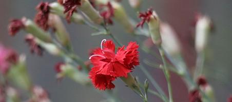 balkonpflanzen ausputzen Pflegetipps