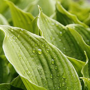 Balkonpflanzen-lexikon | Pflanzen Auf Dem Balkon Hubsche Balkonpflanzen Pflegeleicht