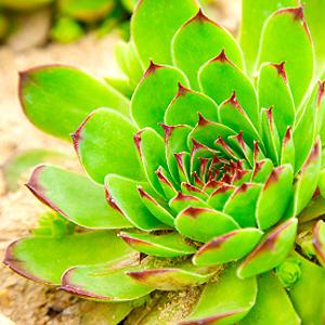 Balkonpflanzen-lexikon | Pflanzen Auf Dem Balkon Balkonblumen Pflanzen Kalten Jahreszeit