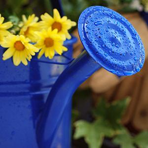Balkonpflanzen richtig gießen