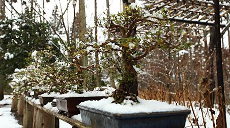 Balkonpflanzen winterhart balkonania for Winterharte balkonpflanzen