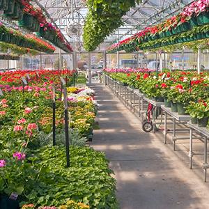 Balkonpflanzen online bestellen