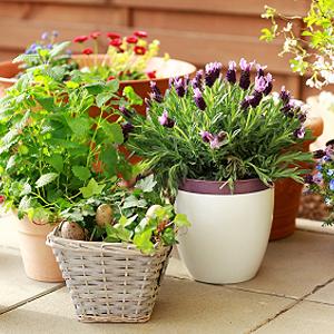 Balkonpflanzen Standort