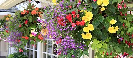 Ampelpflanzen für Balkon und Terrasse