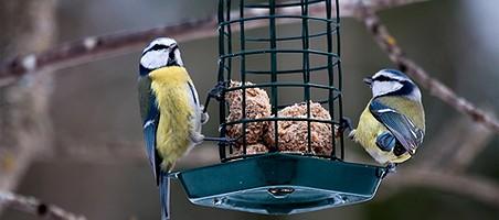 Im Winter Vögel füttern