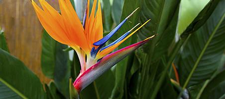 Exotische Kübelpflanzen