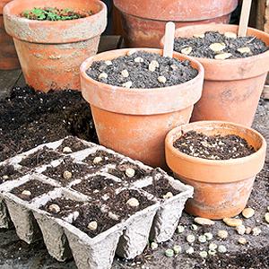 Aussaat Pflanzen Vermehren Tipps Zum Saen