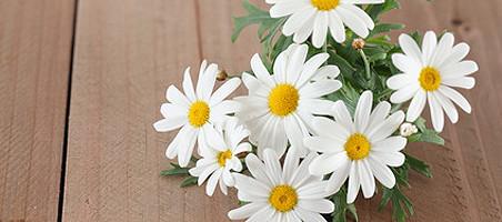 Balkonpflanzen mit weißen Blüten