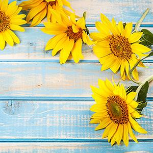 Balkonpflanzen Mit Gelben Bluten Gelb Bluhende Balkonblumen
