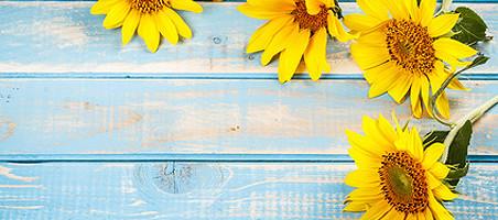 Balkonpflanzen mit gelben Blüten