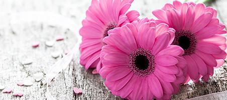 Balkonpflanzen mit rosa Blüten