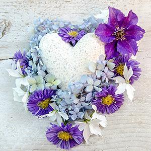 Balkonpflanzen mit violetten Blüten