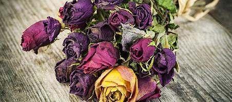 Blumen trocknen Rosen