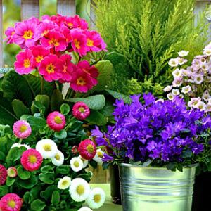 balkonpflanzen kaufen tipps zum kauf von balkonpflanzen. Black Bedroom Furniture Sets. Home Design Ideas