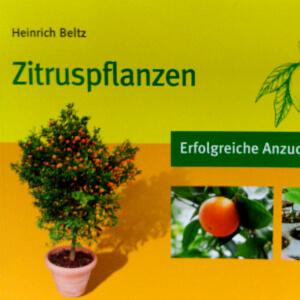 Zitruspflanzen: Erfolgreiche Anzucht und Pflege
