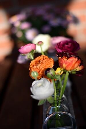Ranunkeln in der Vase